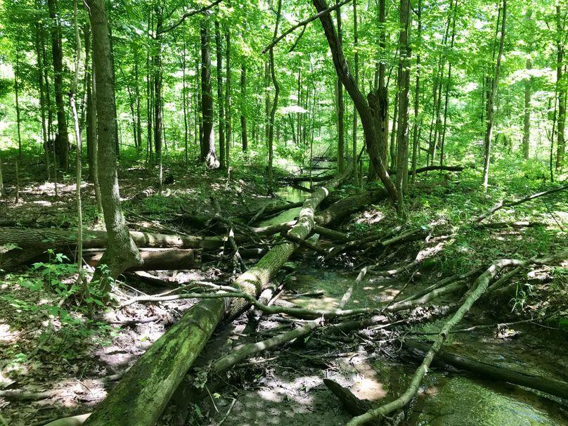 22 creek