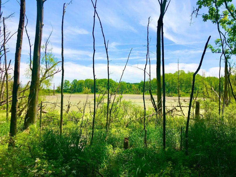 44 east middle wetland n side
