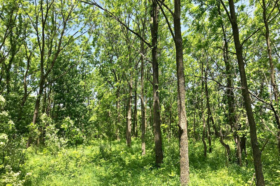 41 walnuts east