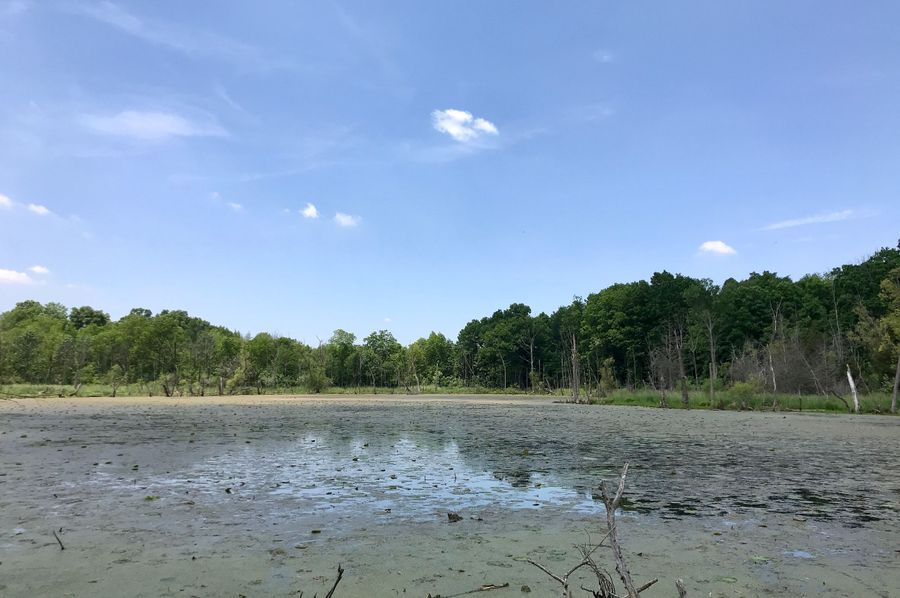43 east middle wetland pond