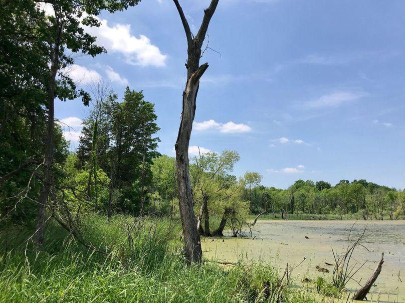 43 east middle wetlands pond