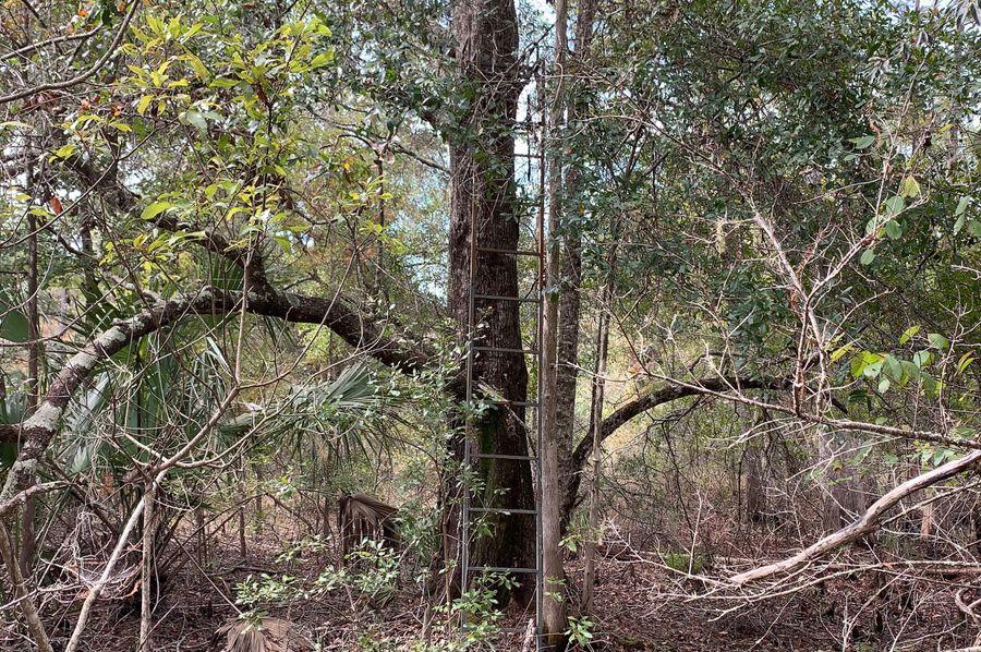 14. tree stand
