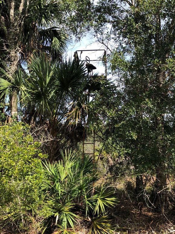 18. tree stand