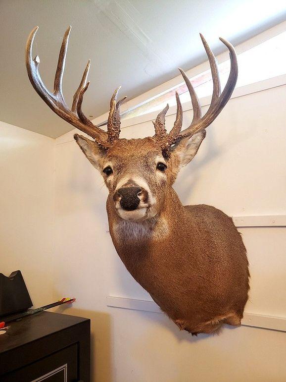 4bbuck mount