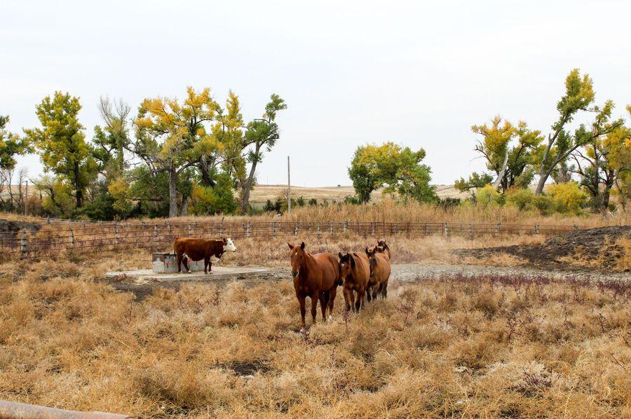 17 horses