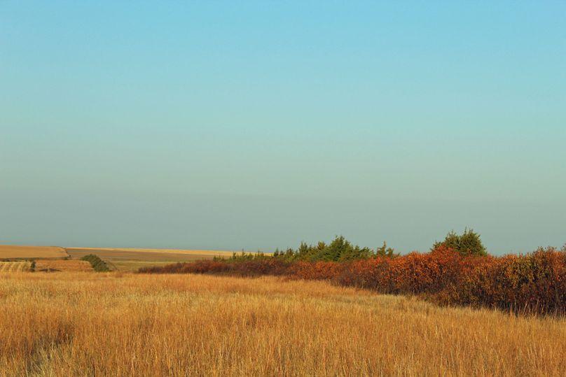 Tuttle north windbreak 1