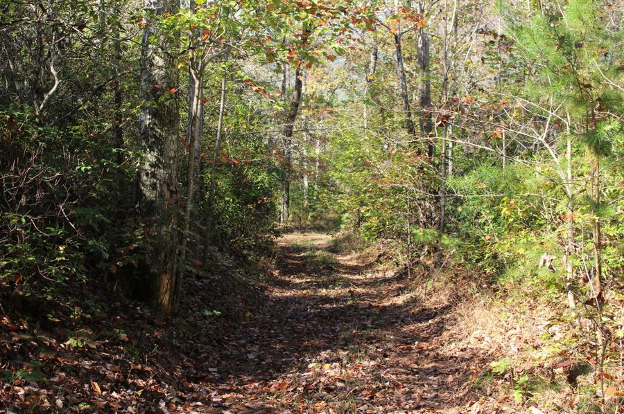 028 trail 7