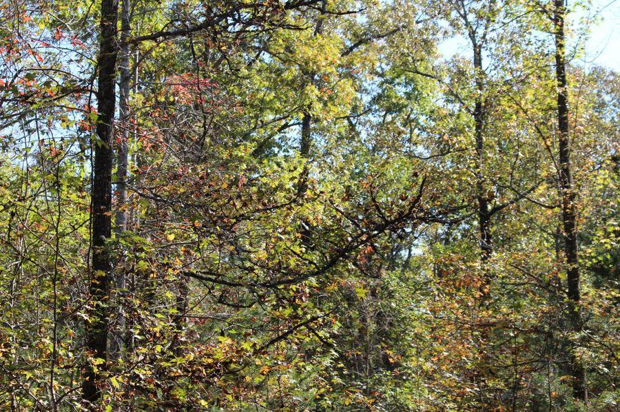 030 trees 1