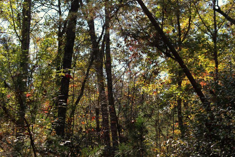 031 trees 2