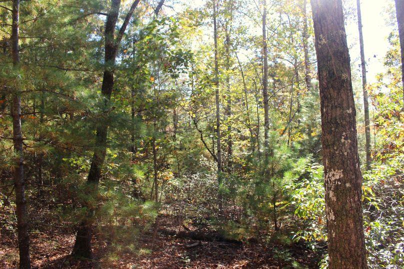 034 trees 5
