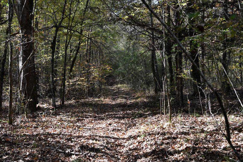 (4) trail
