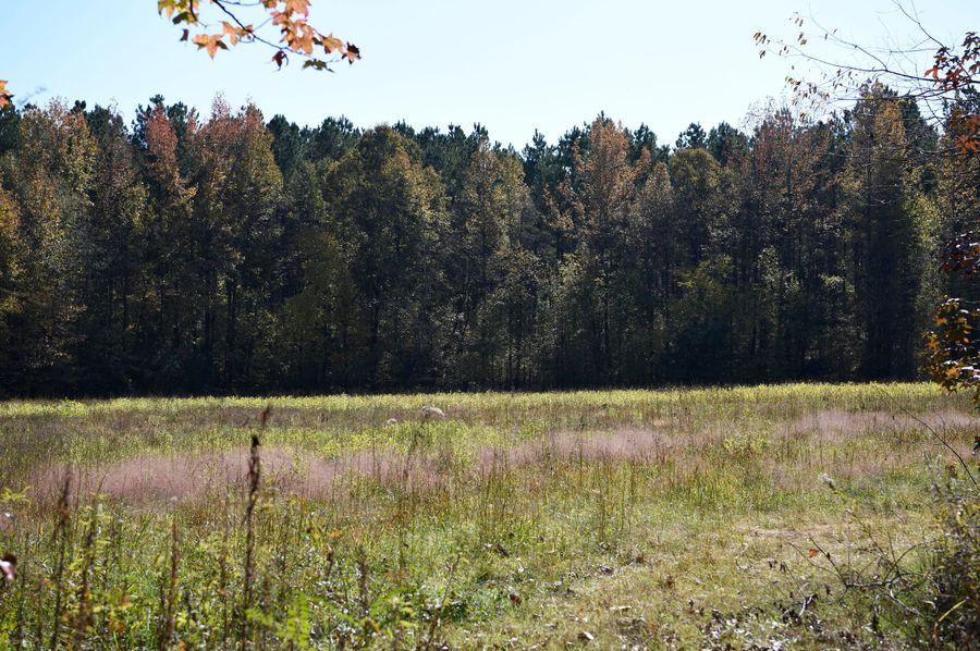 (1) field