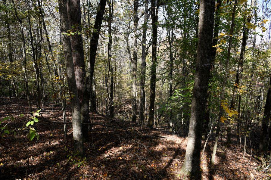 (11) woods