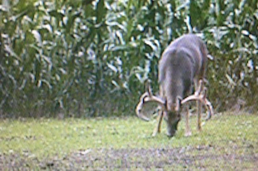 Schreiber deer 3