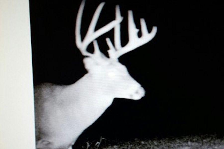 Schreiber deer 4