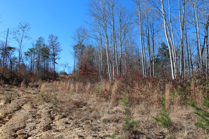 008 gently rolling slope near the upper elevations on the east portion of the property