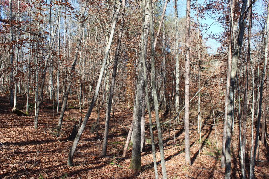 013 more of the wooded, gently rolling slopes found throughout the middle of the property