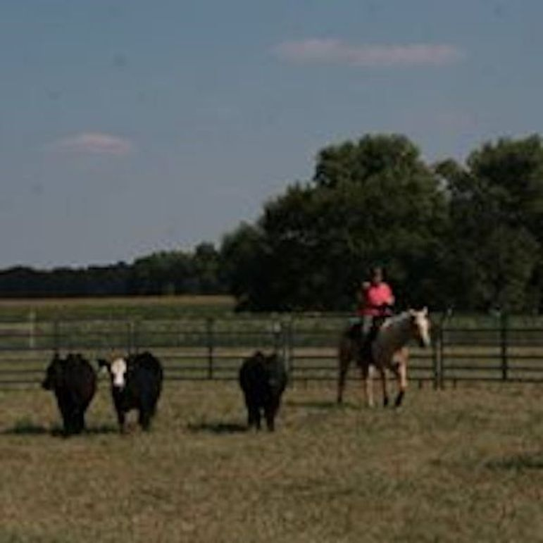 Cattle working