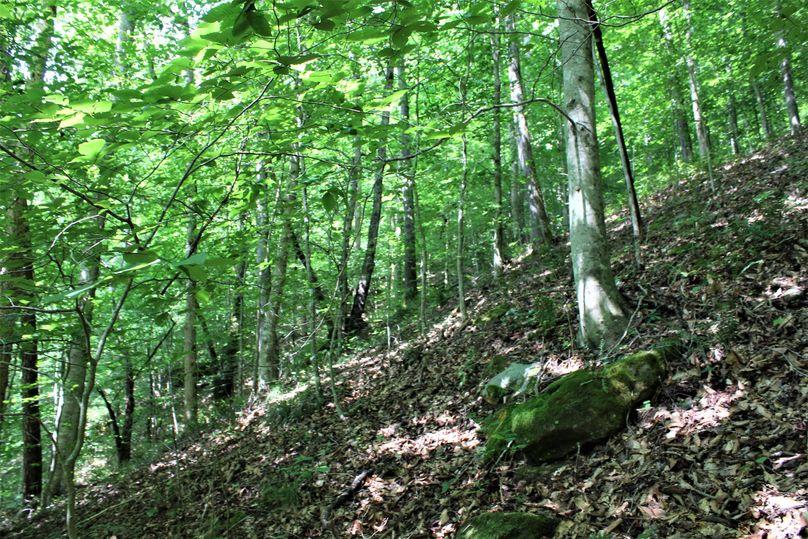 004 wooded hillside near the southwest corner of the property