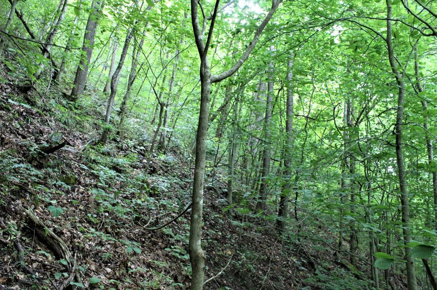 006 wooded east facing slope near the east boundary
