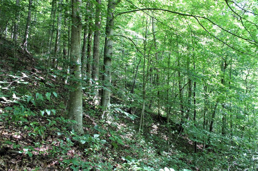 009 wooded shot near the southeast edge of the property