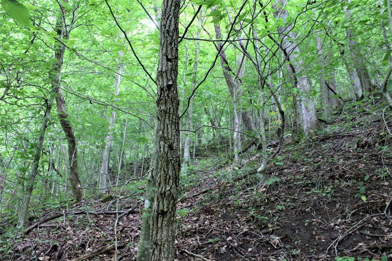 010 wooded shot of the open understory near the middle of the property