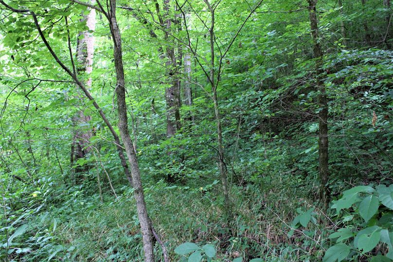 012 wooded west facing slope