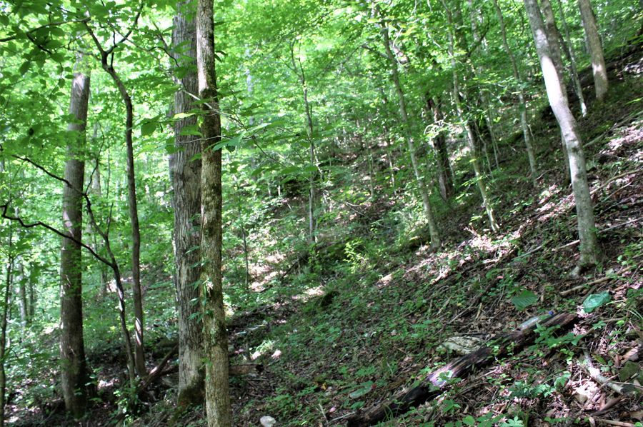 014 wooded hillside slope near the west boundary of the property