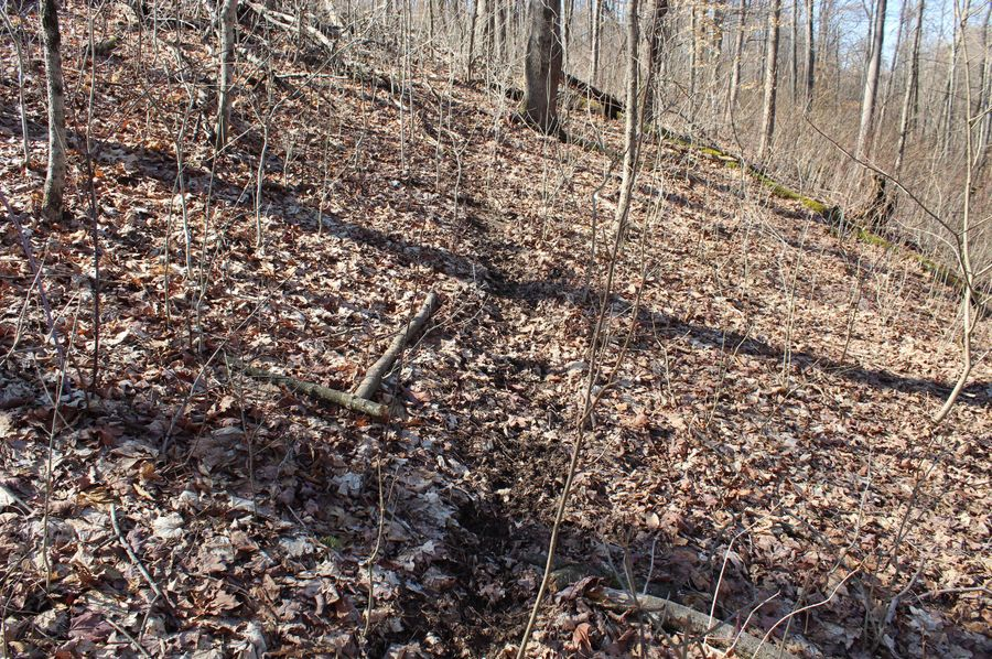 13-just one of the heavily traveled deer trails that are located throughout the property