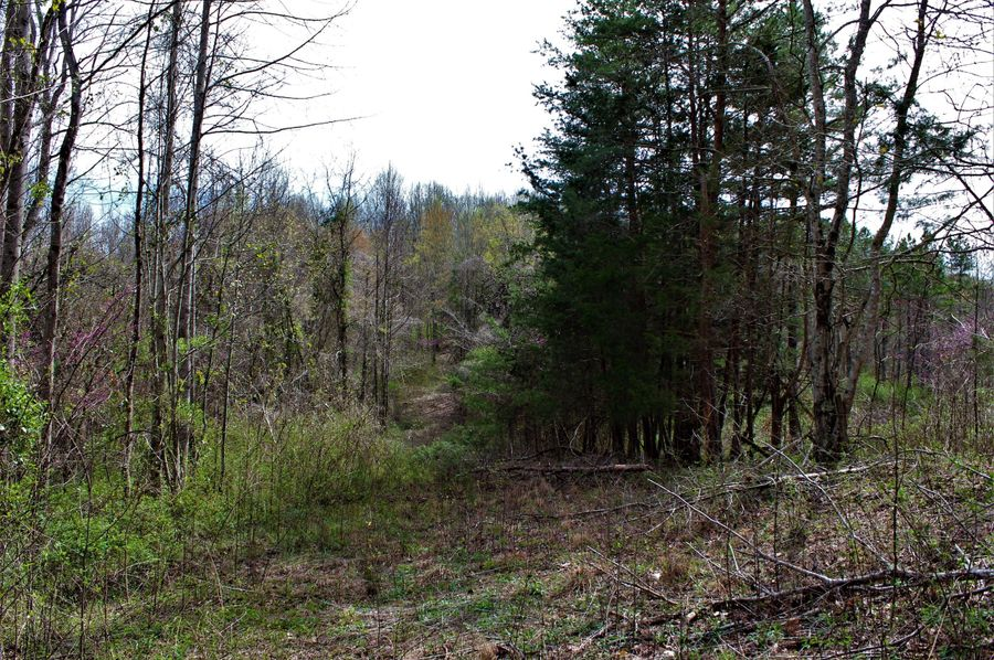 004 property line through the beautiful evergreens