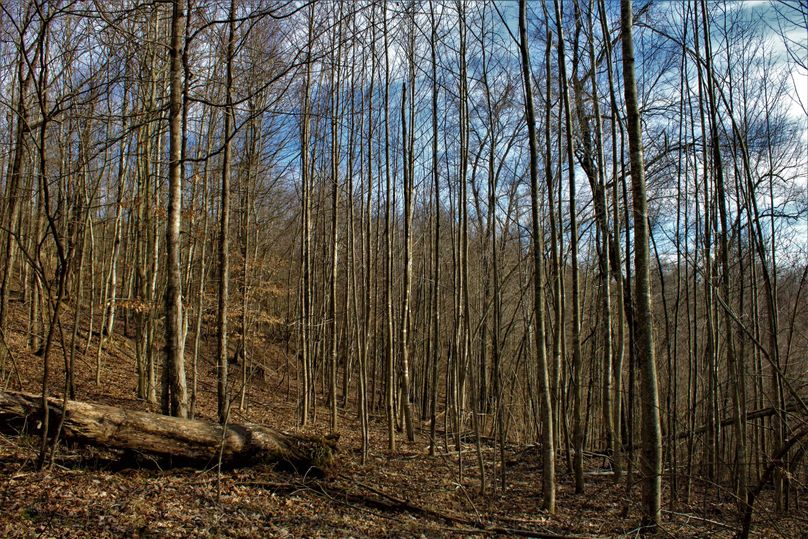 010 great young timber thicket