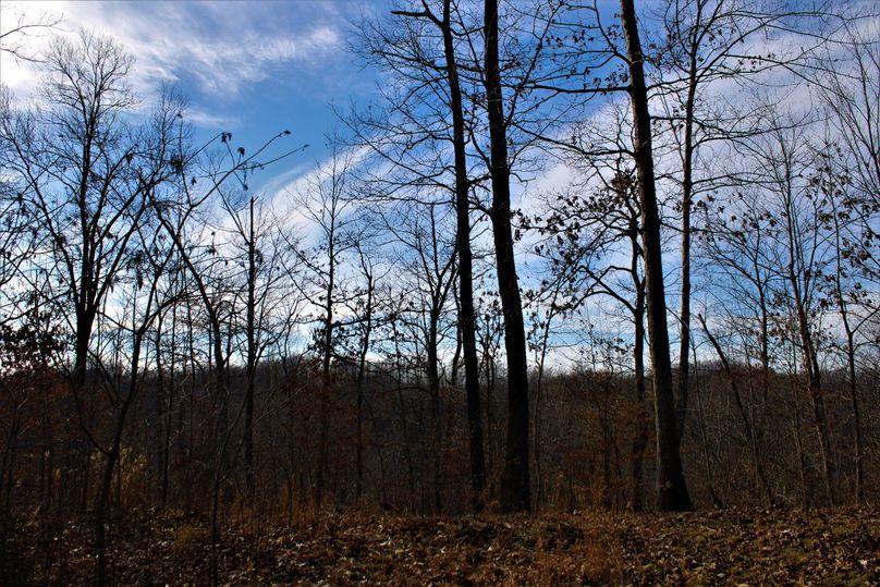 018 nice little oak flat of the southern point