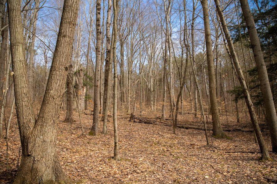 14 beautiful northern michigan forest