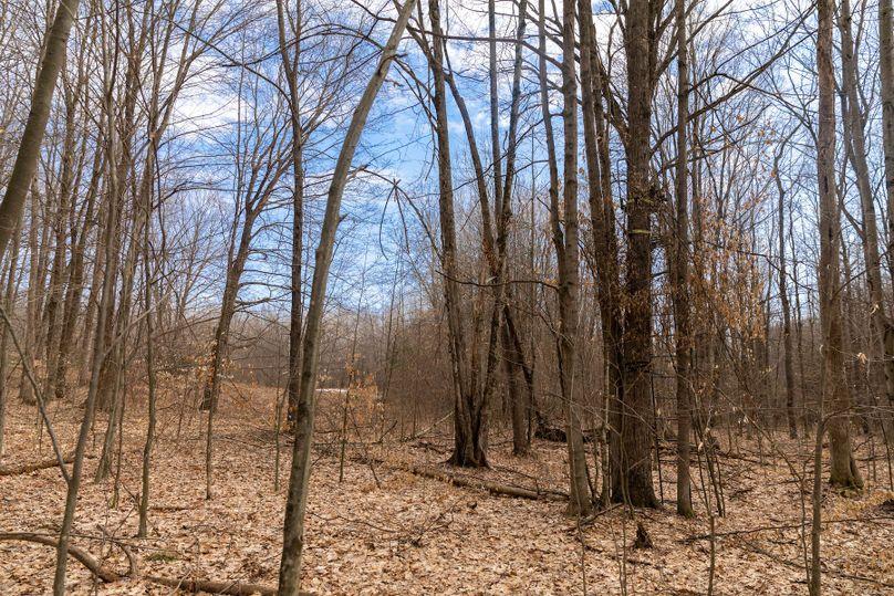17 treestand near food plot