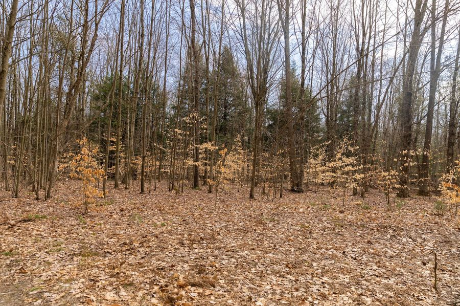 19 open area could become food plot