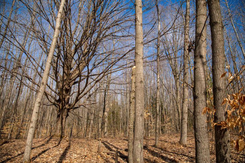 11 mature timber
