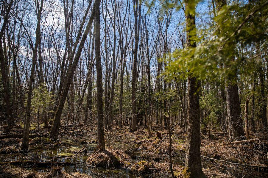 12 dark secluded swamp