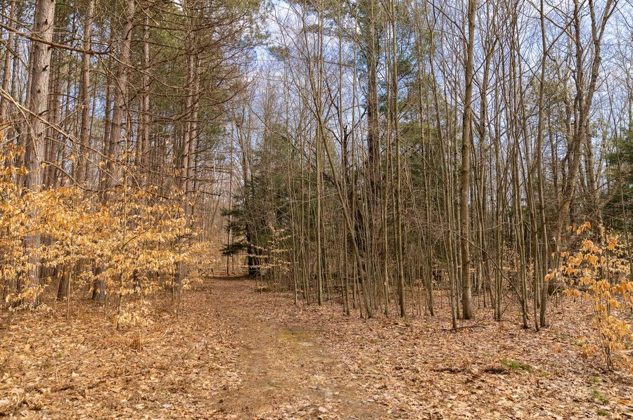 1 secluded northern michigan acreage