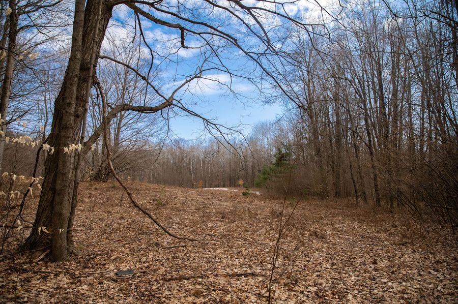 2 open areas could be food plots