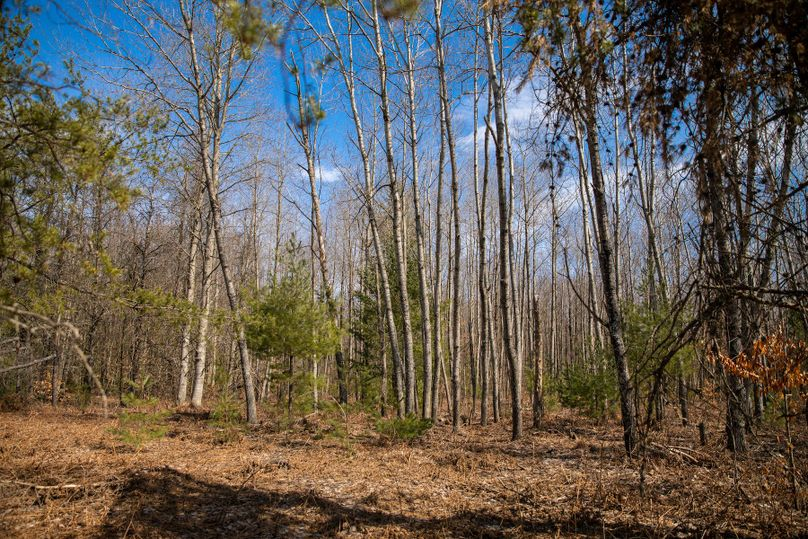 3 timber diversity