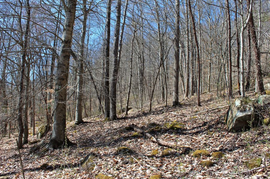 016 wooded forest east facing slope