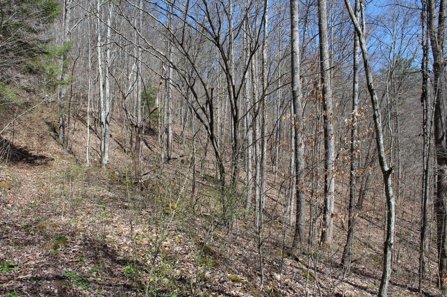 029 forested area that use to be old pasture land in the southwest area of the property