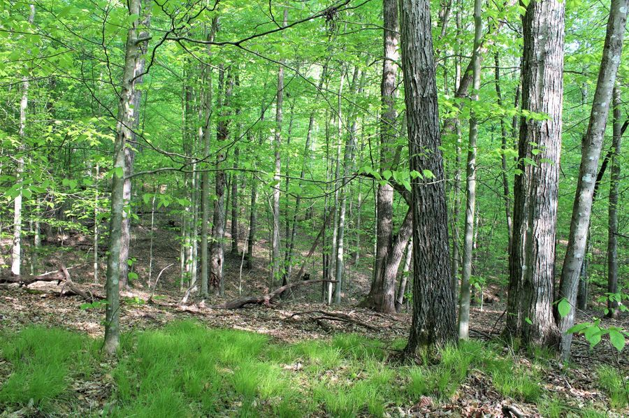 040 open wooded forest area in the middle of the property