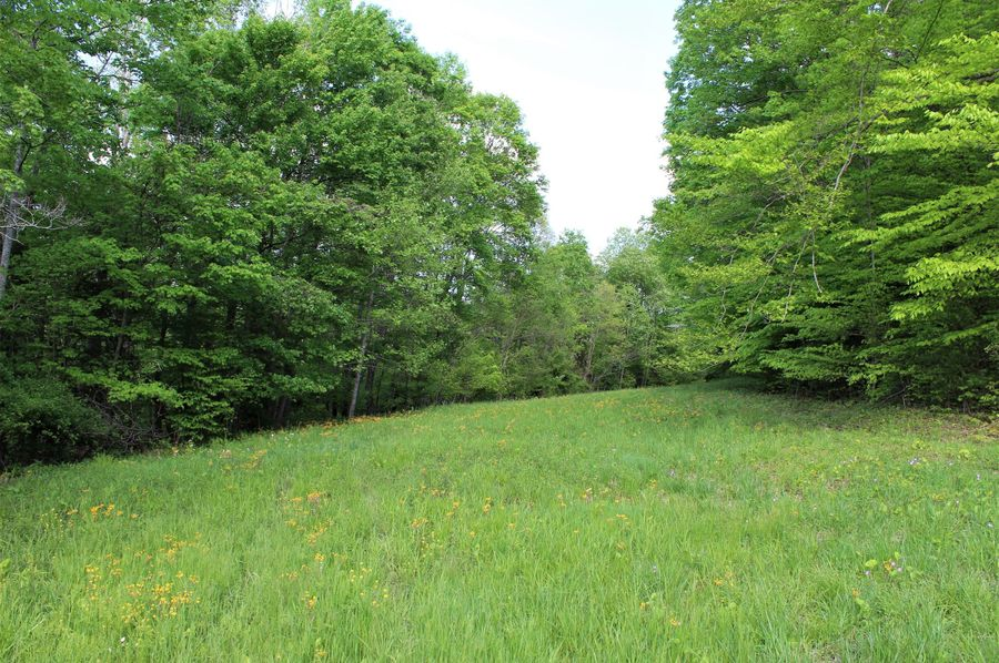 041 beautiful spring field picture of the field strip on the north bench