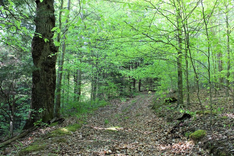 044 forest road leading to the west area of the property