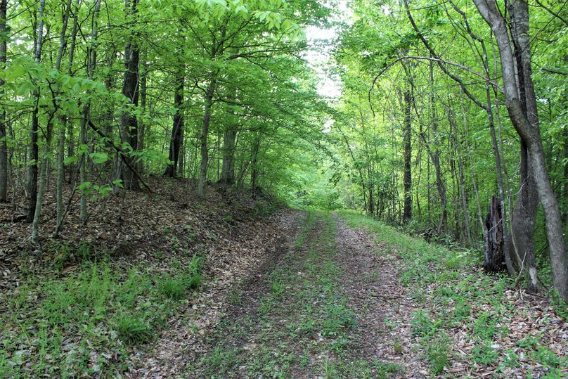 003 wooded forest road in the center of the property