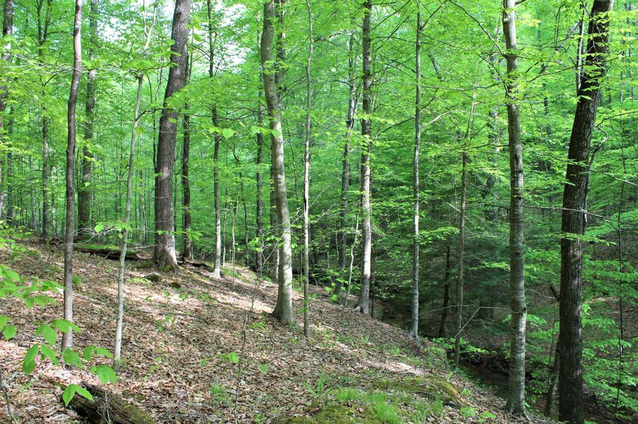 006 open hardwood forest along the south portion of the property