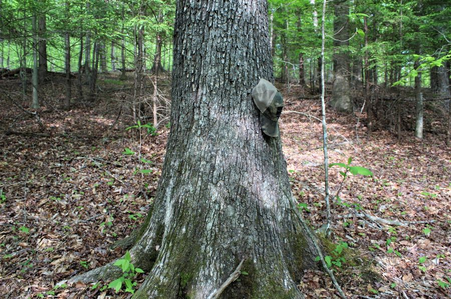 023 big mature white oak in the southern area of the property