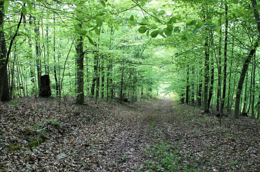 020 one of the forest roads leading back to the west area of the property
