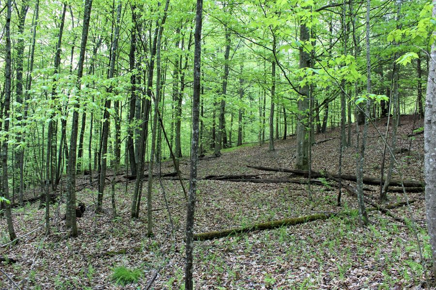 022 some of the open forest areas in the southcentral part of the property